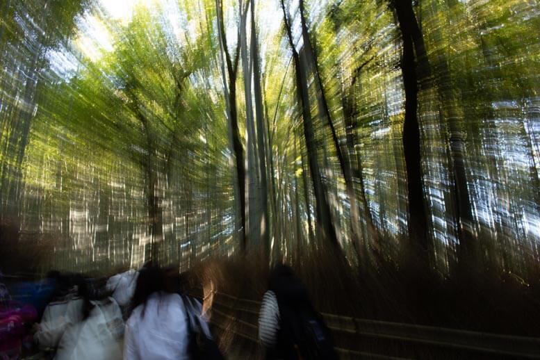 天龍寺・竹林の小径