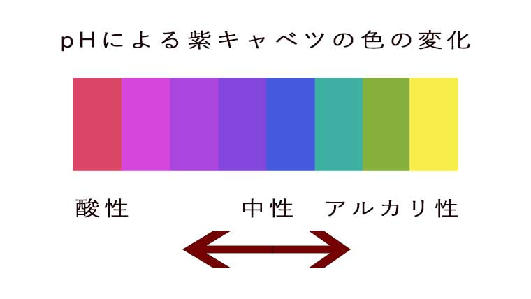 ph値による紫キャベツの色の変化