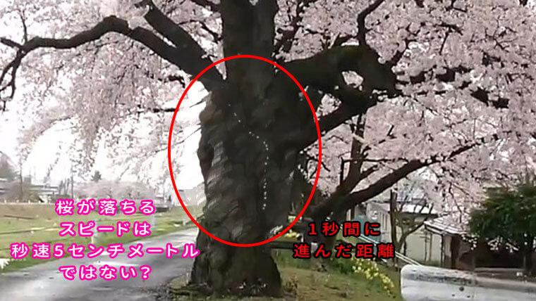 桜の落ちるスピード