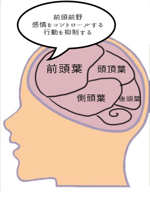 前頭葉の働き