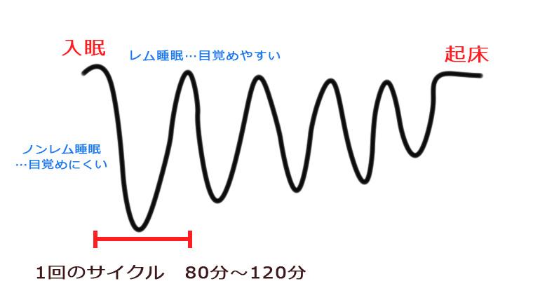 睡眠のリズム ノンレム睡眠とレム睡眠のグラフ
