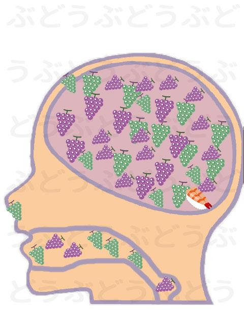 あまぼしの脳内